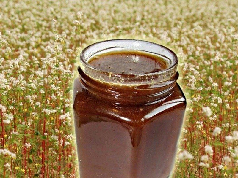 Гречишный мёд цвет