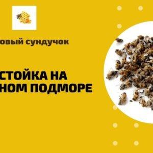 Настойка на пчелином подморе