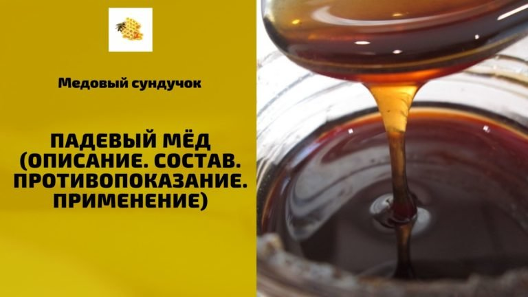 Падевый мёд (Описание. Состав. Применение. Противопоказания)