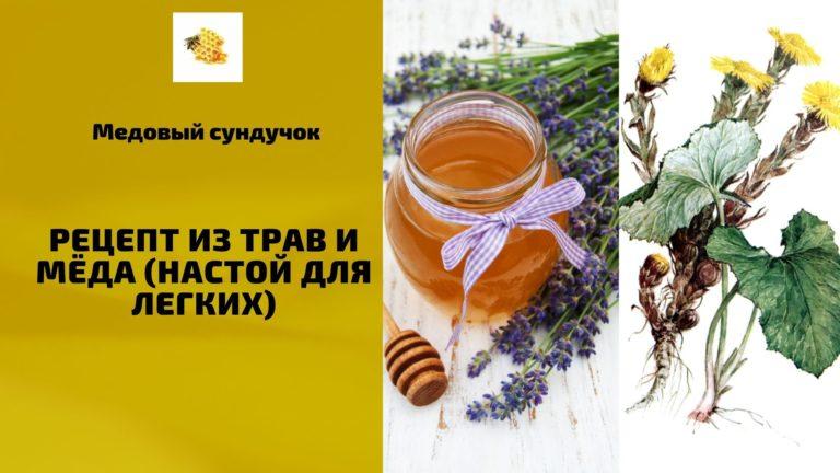 Лечение органов дыхания с помощью мёда