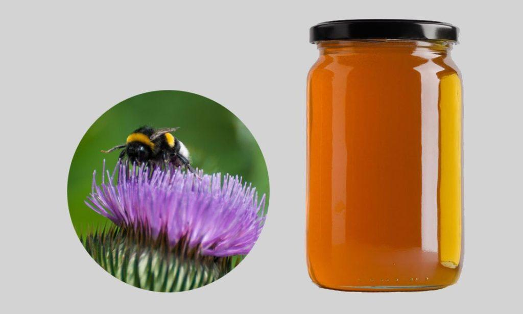 Мед из расторопши как выглядит