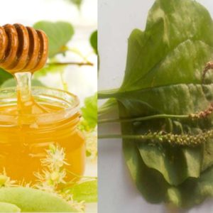 рецепт мёд и подорожник