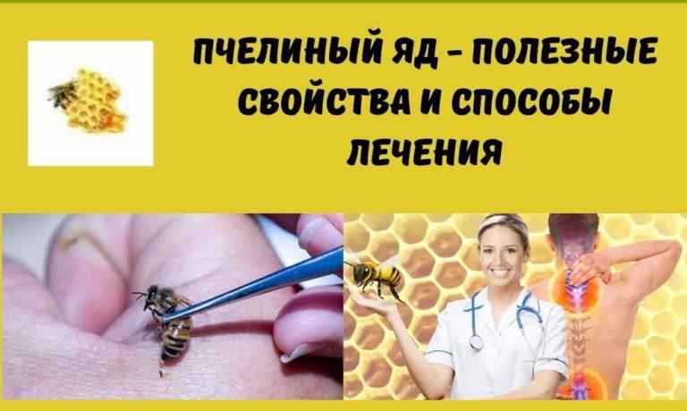 Пчелиный яд — полезные свойства и способы лечения