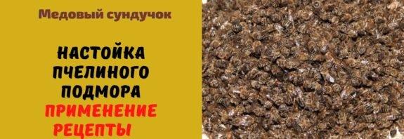 Пчелиный подмор настойка на водке. Польза. Рецепты. Применение
