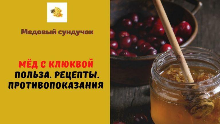 Мёд с клюквой — Польза. Рецепты. Противопоказания