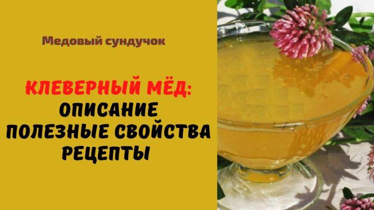 Клеверный мёд: Описание. Состав. Полезные свойства. Рецепты