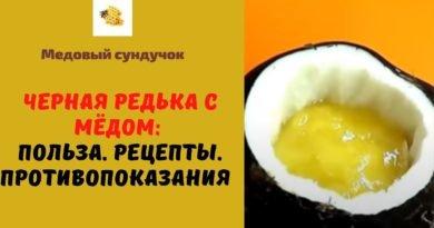 Черная редька с мёдом: Польза. Рецепты. Противопоказания