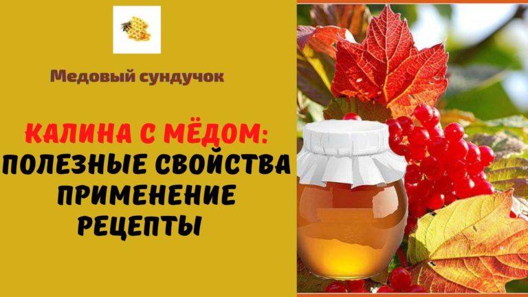 Калина с мёдом: Полезные свойства. Применение. Рецепты