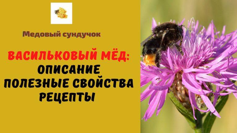 Васильковый мёд: Описание. Полезные свойства. Рецепты
