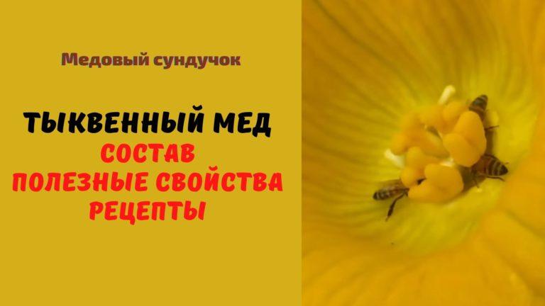 Тыквенный мёд: Описание. Полезные свойства. Применение. Рецепты