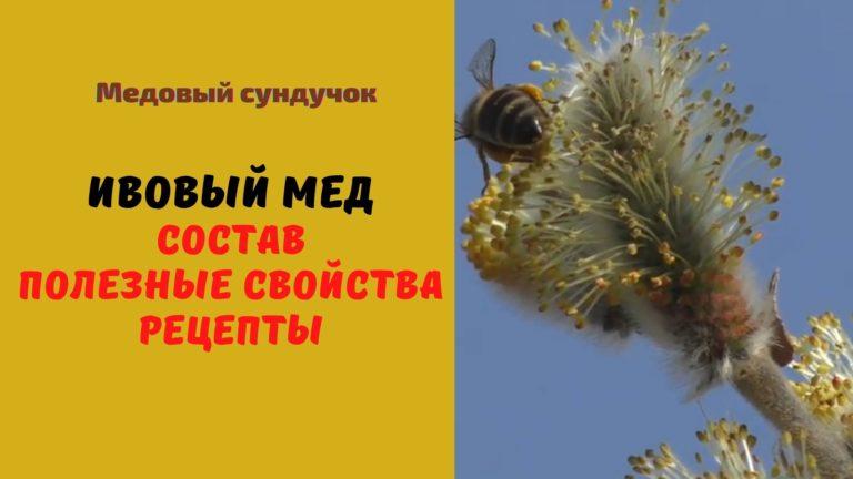Ивовый мёд: Описание. Состав.Полезные свойства. Рецепты