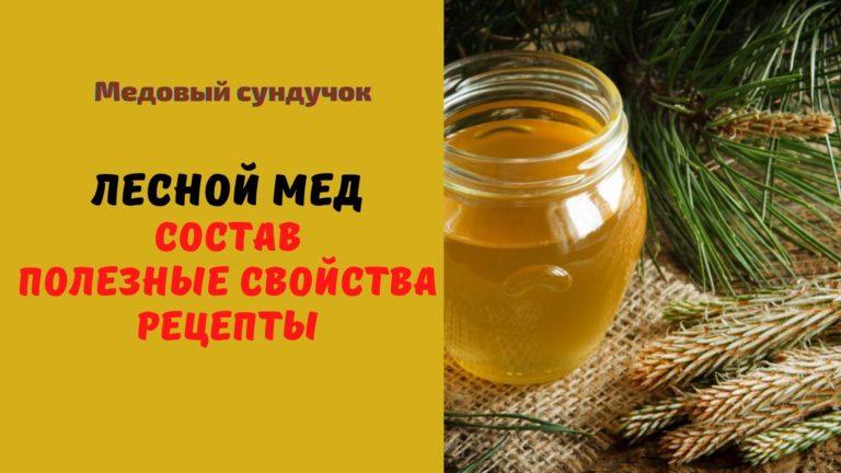 Лесной мёд: Описание. Состав. Полезные свойства. Рецепты