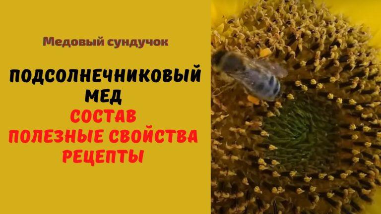 Подсолнечниковый мёд: Описание. Полезные свойства. Рецепты. Применение