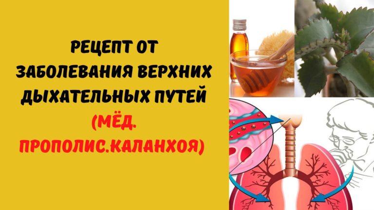 Рецепт от заболеваний верхних дыхательных путей (Мёд. Прополис. Каланхоэ)