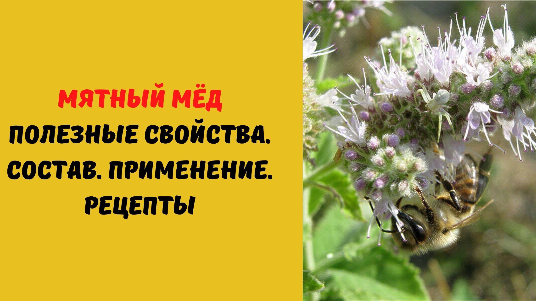 мятный мёд