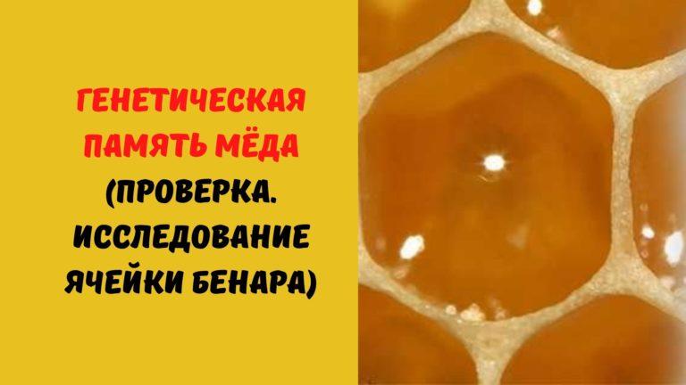 Генетическая память мёда (Проверка. Исследование ячейки Бенара)