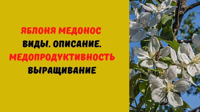 Яблоня медонос: Виды. Описание. Медопродуктивность. Выращивание